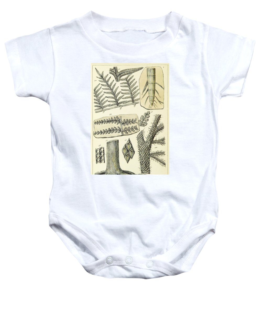 Historic Baby Onesie featuring the photograph Paleozoic Flora, Calamites, Illustration by British Library