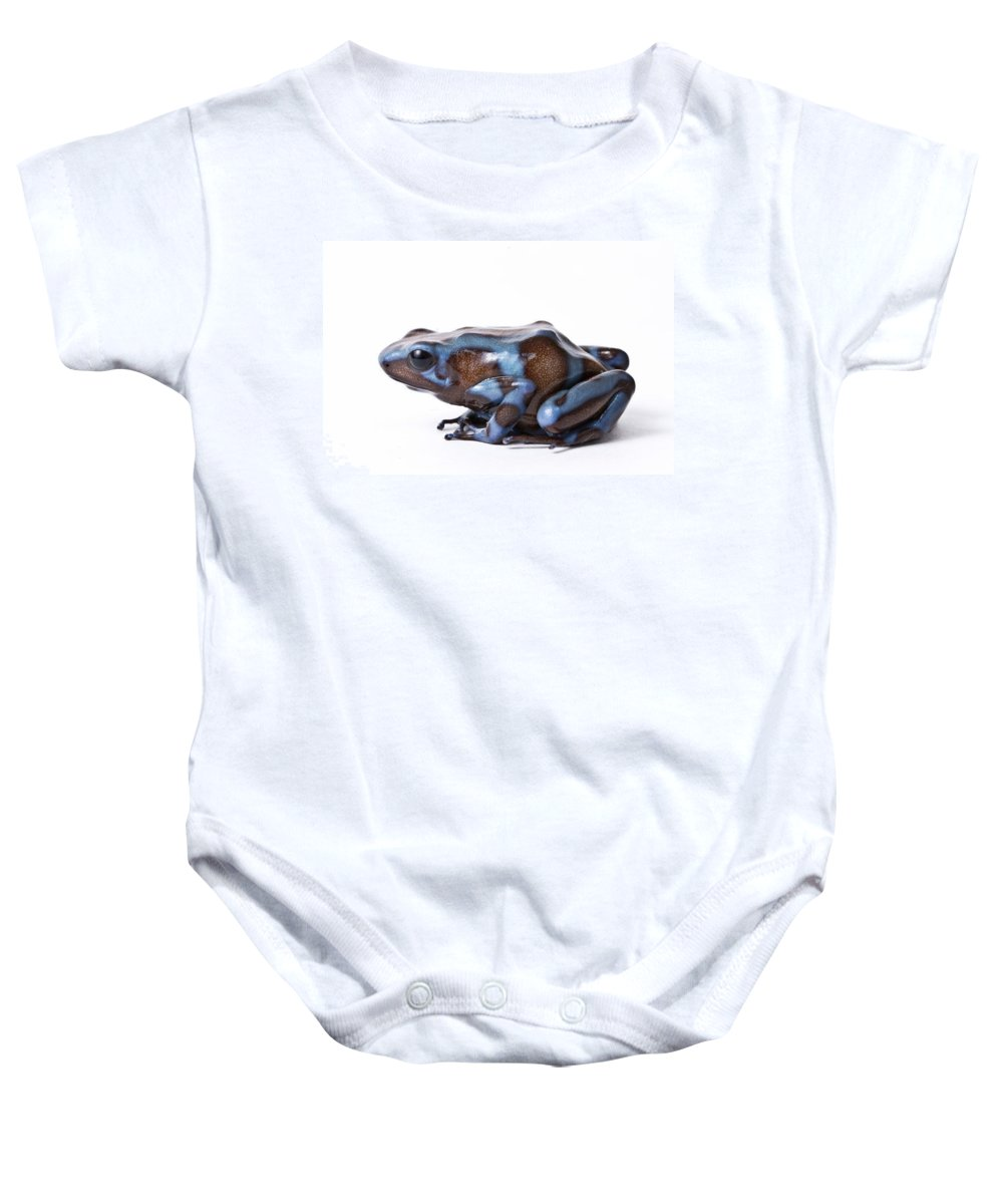 Adult Baby Onesie featuring the photograph Panamanian Green And Black Poison Dart by David Kenny