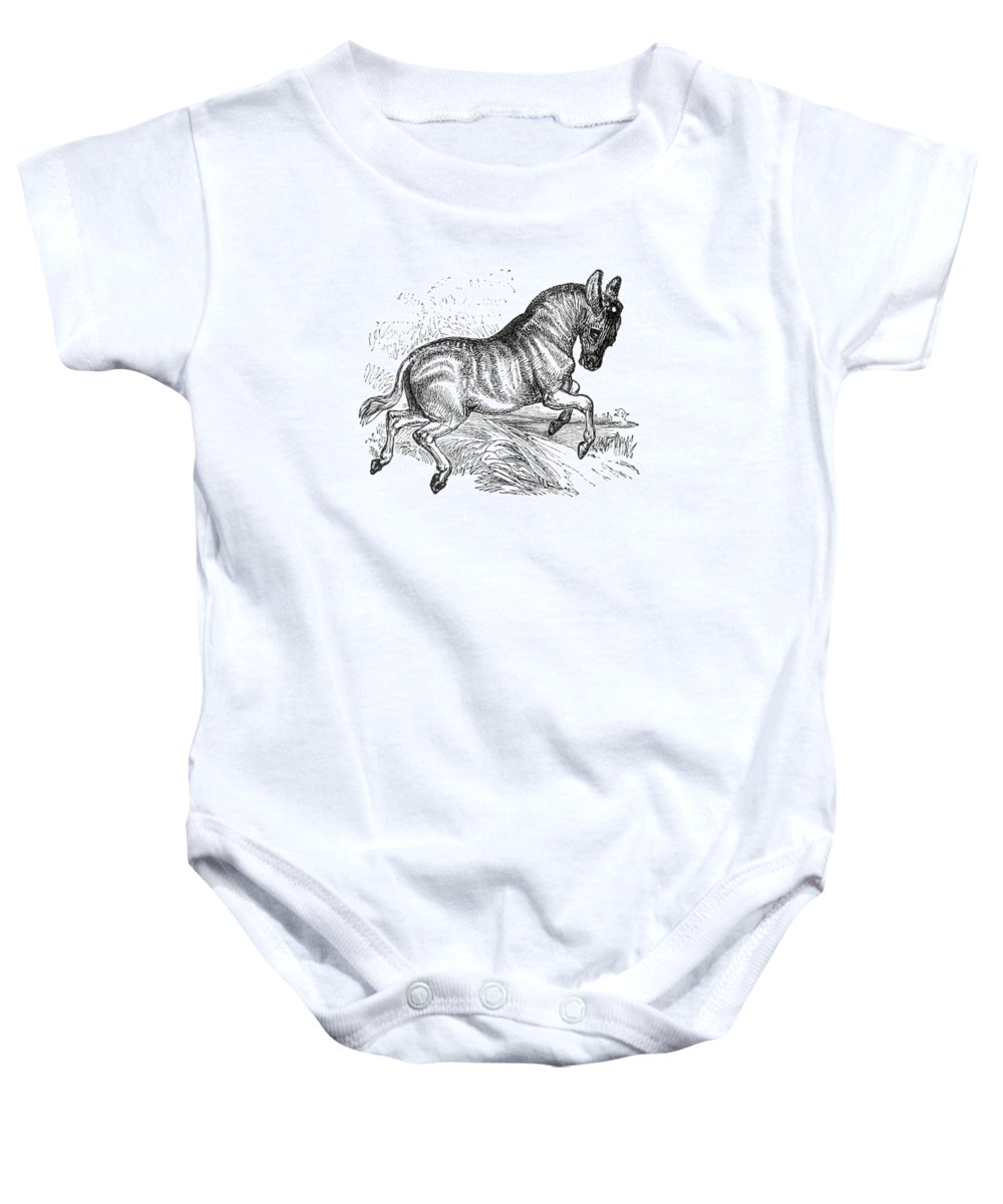 Historic Baby Onesie featuring the photograph Quagga, Historical Illustration, 1874 by British Library