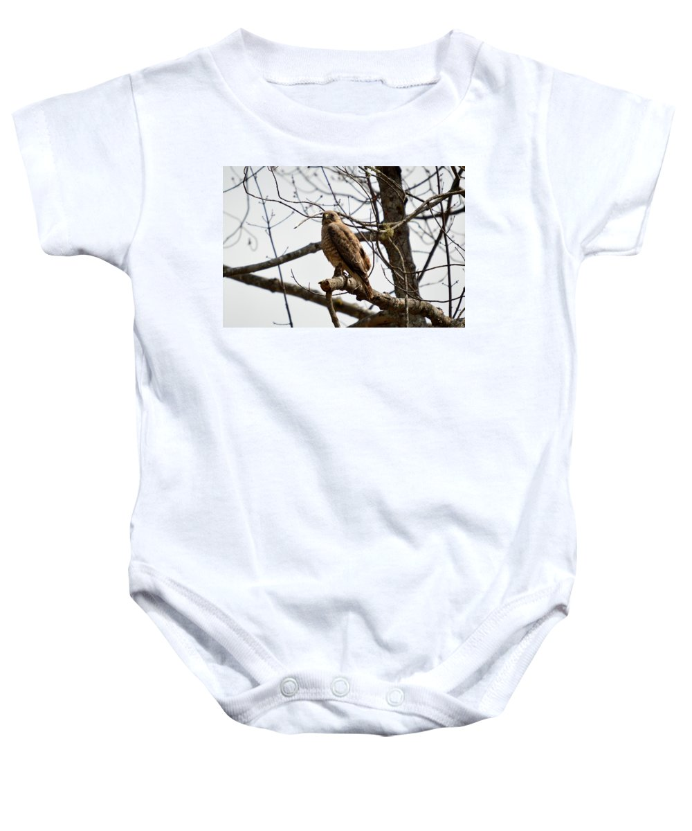 Redtailed Hawk Baby Onesie featuring the photograph Raptor Gaze by Thomas Phillips