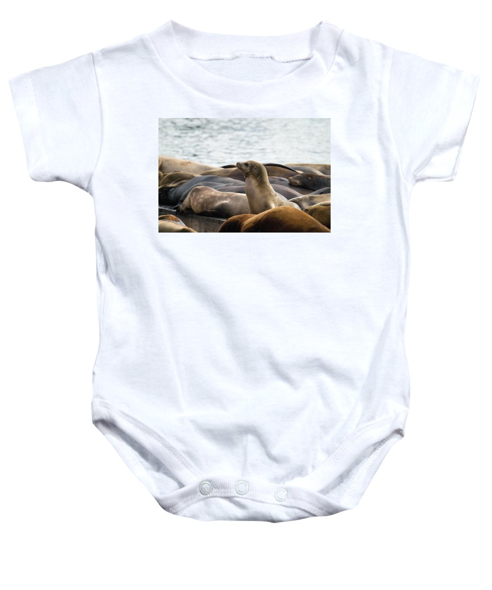 Sea Baby Onesie featuring the photograph Sea Lions Sunning On Barge At Pier 39 San Francisco by Jit Lim
