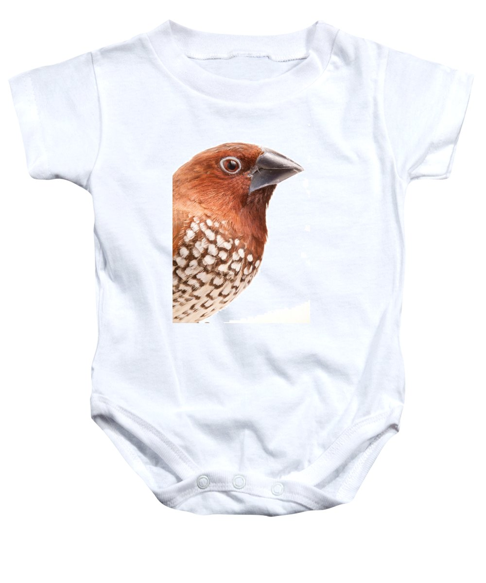 Spice Finch Baby Onesie featuring the photograph Spice Finch Lonchura Punctulata Portrait by David Kenny
