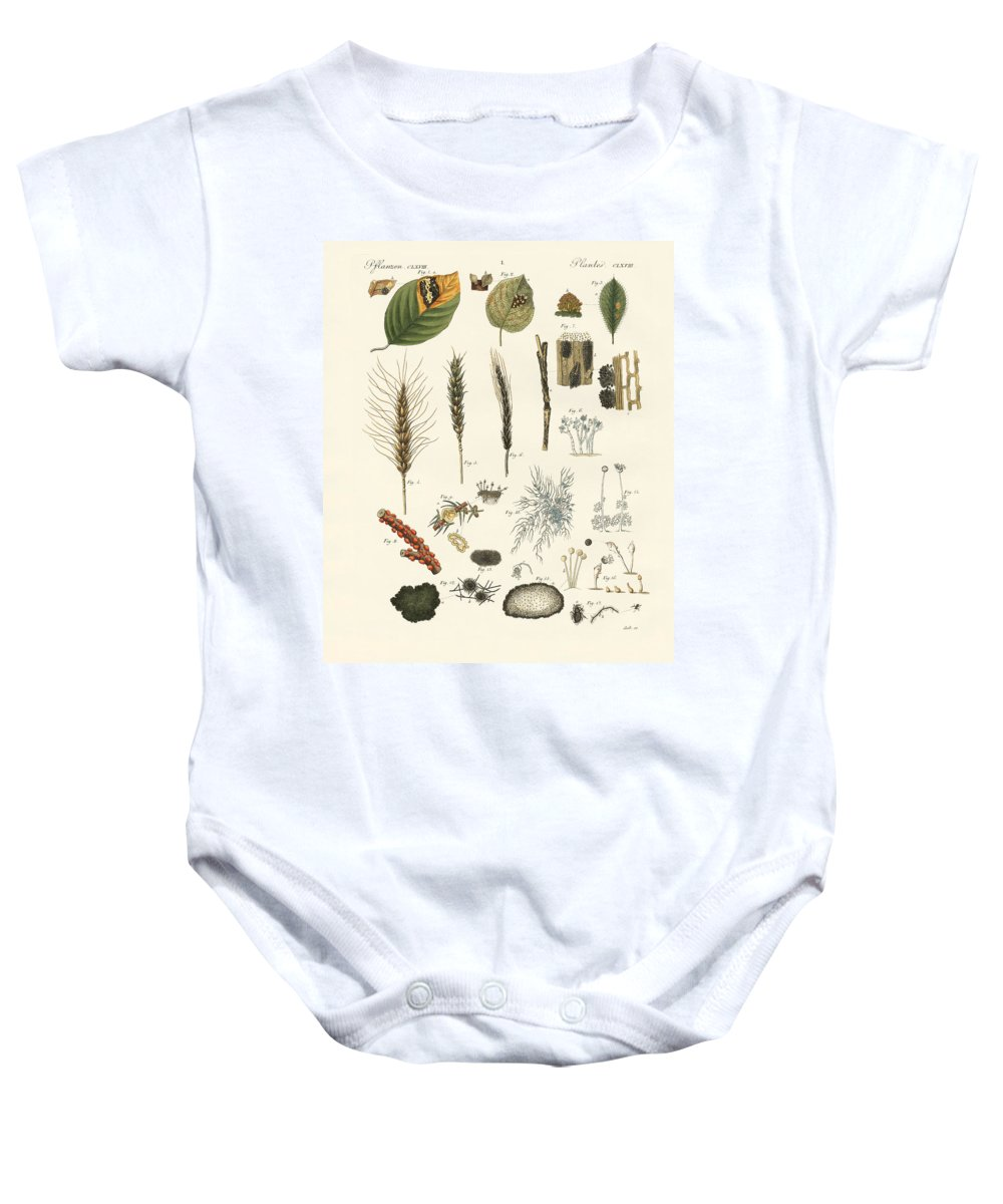 Bertuch Baby Onesie featuring the drawing Strange Dusty And Thread Fungus by Splendid Art Prints