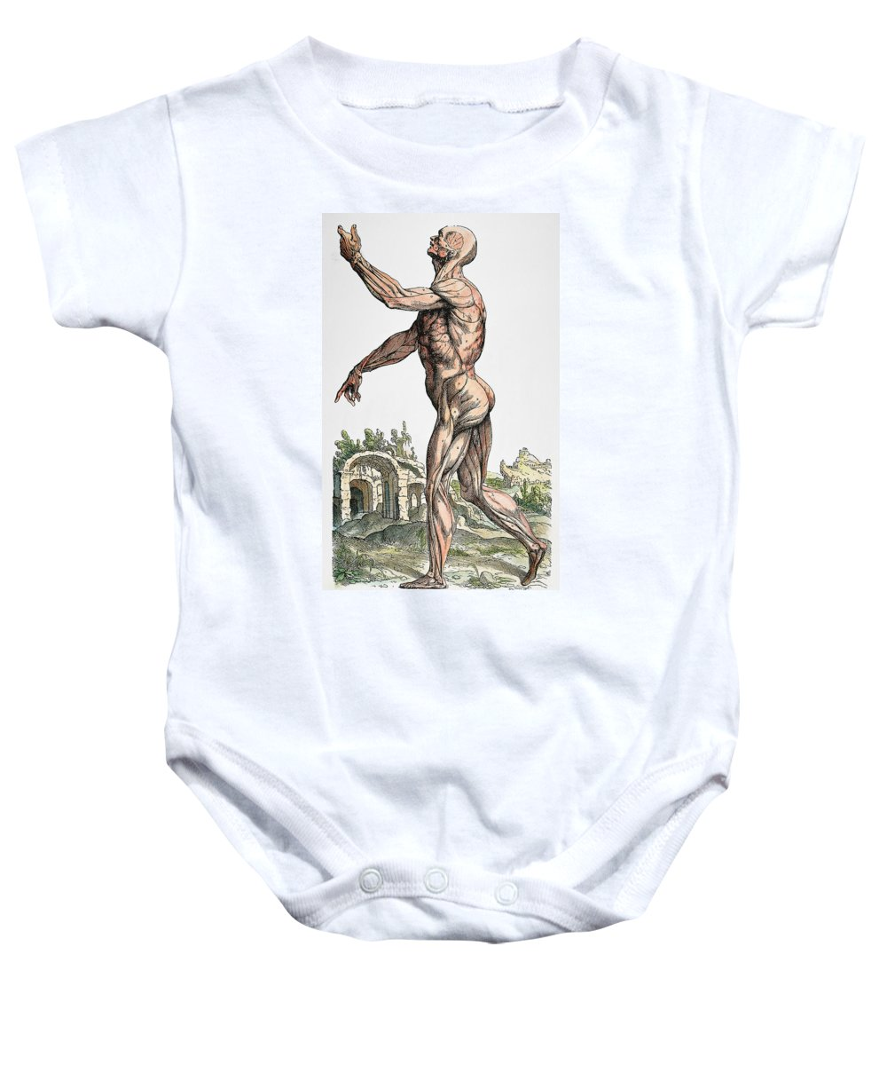 1543 Baby Onesie featuring the photograph Vesalius: Muscles 02, 1543 by Granger