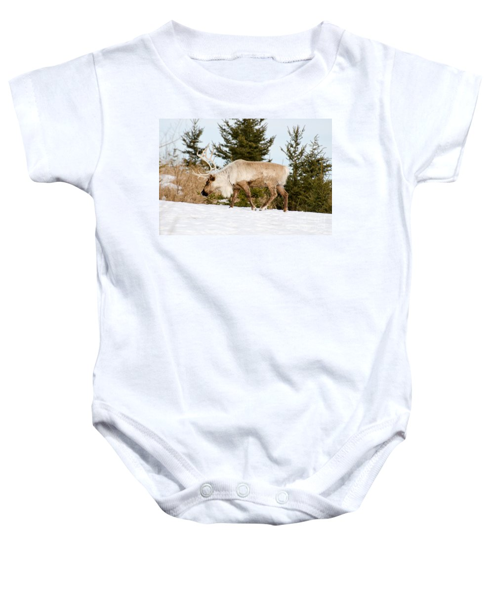 Deer Baby Onesie featuring the photograph Woodland Caribou by Les Palenik