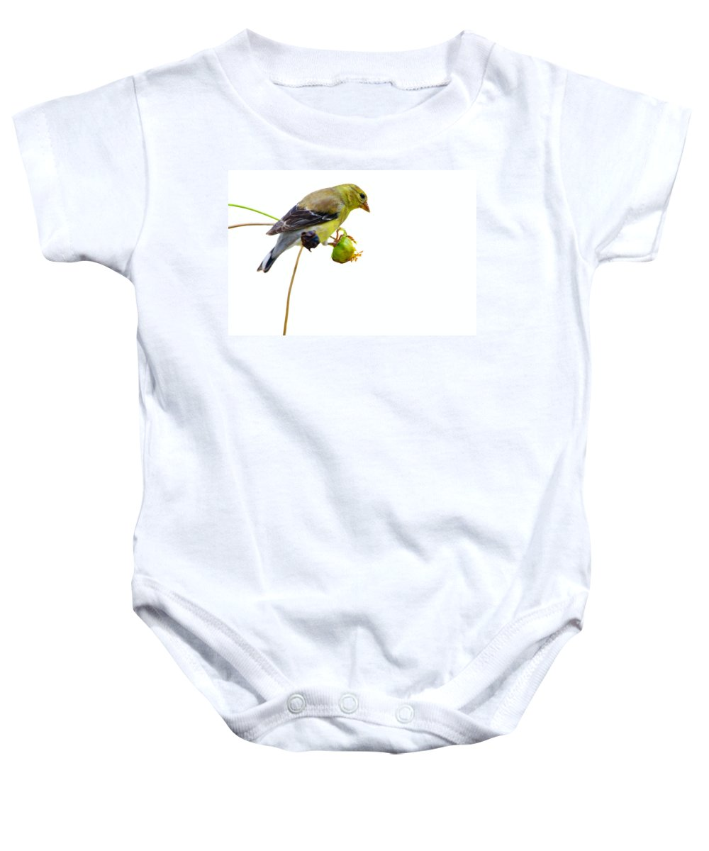 Bird Baby Onesie featuring the photograph Yellow Finch by Alexey Stiop