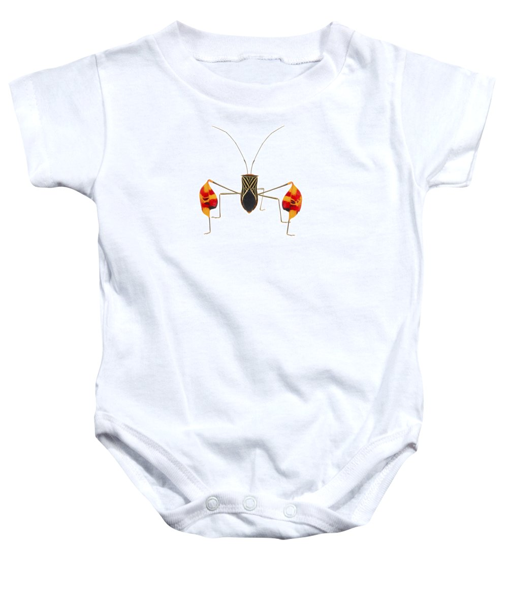 00478782 Baby Onesie featuring the photograph Flagfooted Bug Barbilla Np Costa Rica by Piotr Naskrecki