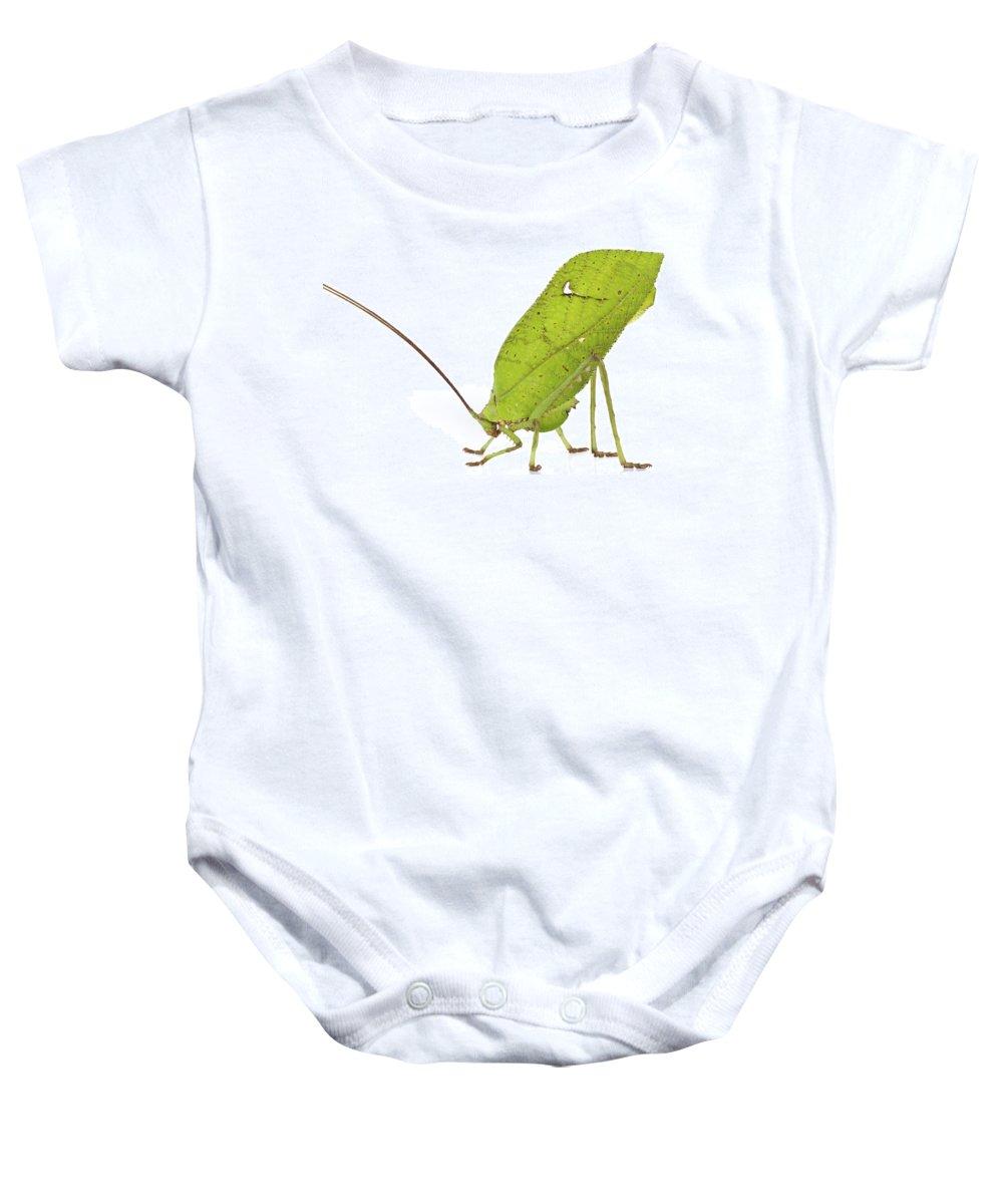 00478843 Baby Onesie featuring the photograph Giant Leaf Katydid Barbilla Np Costa by Piotr Naskrecki