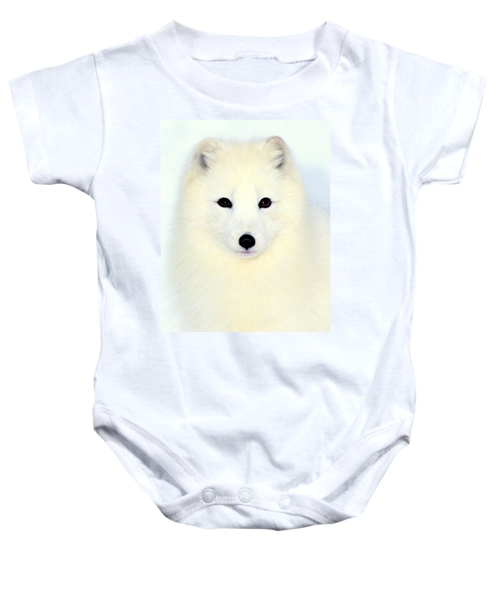 Arctic Fox Baby Onesie featuring the photograph Arctic Fox In Snow by Larry Allan