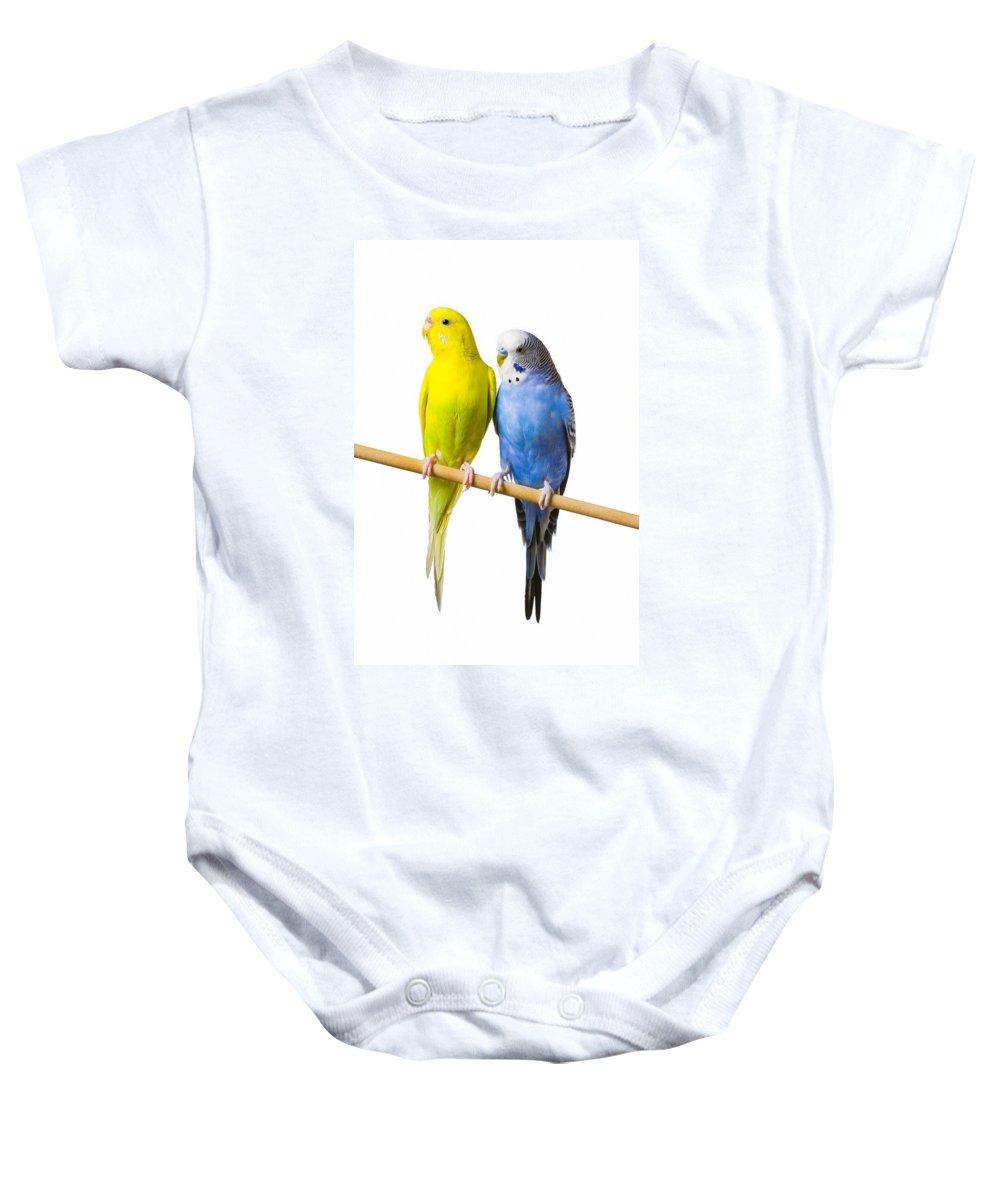 Birds Baby Onesie featuring the photograph Budgerigar Melopsittacus Undulatus On A by Corey Hochachka