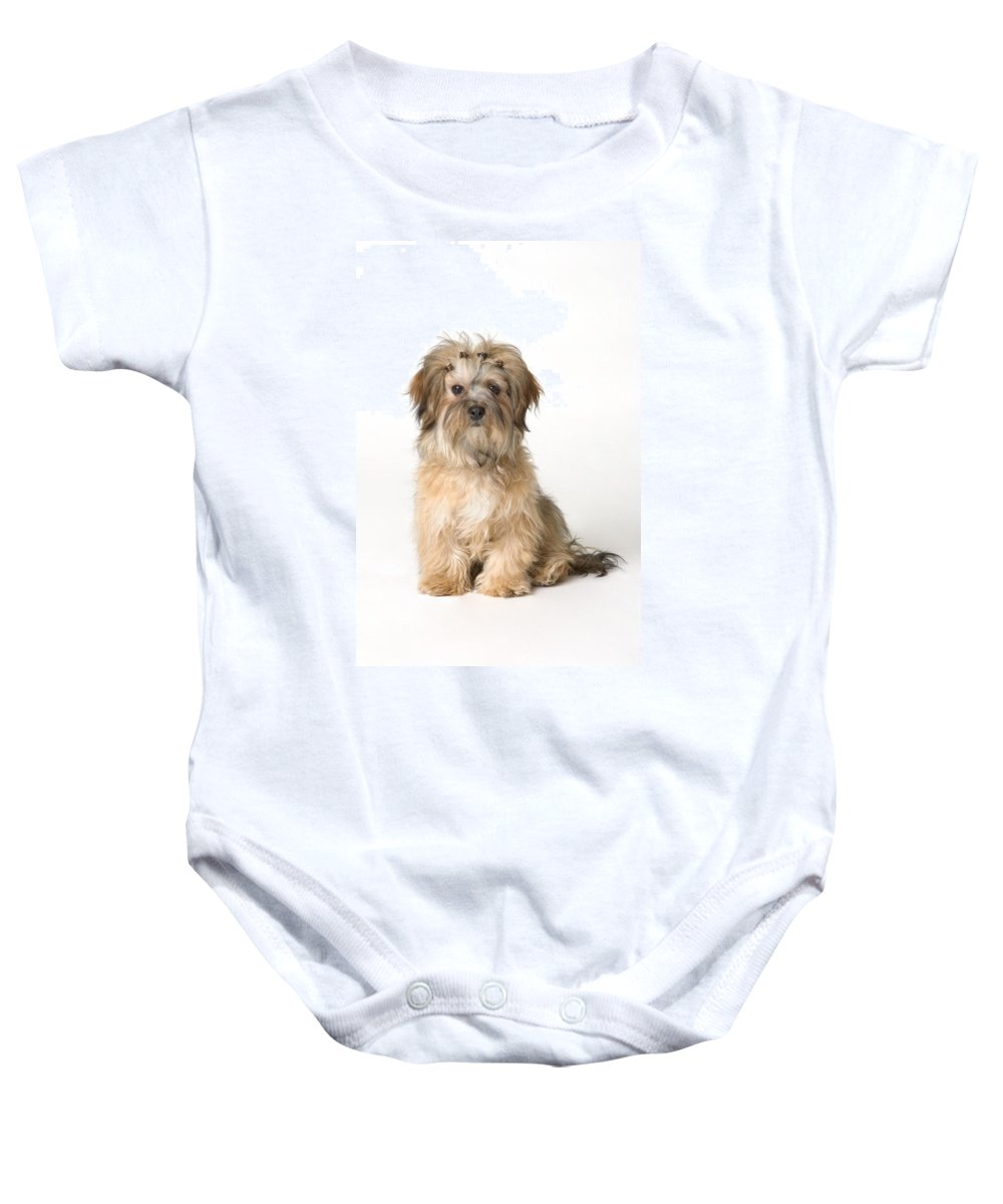 Concept Baby Onesie featuring the photograph Cute Miniature Terrier by Corey Hochachka