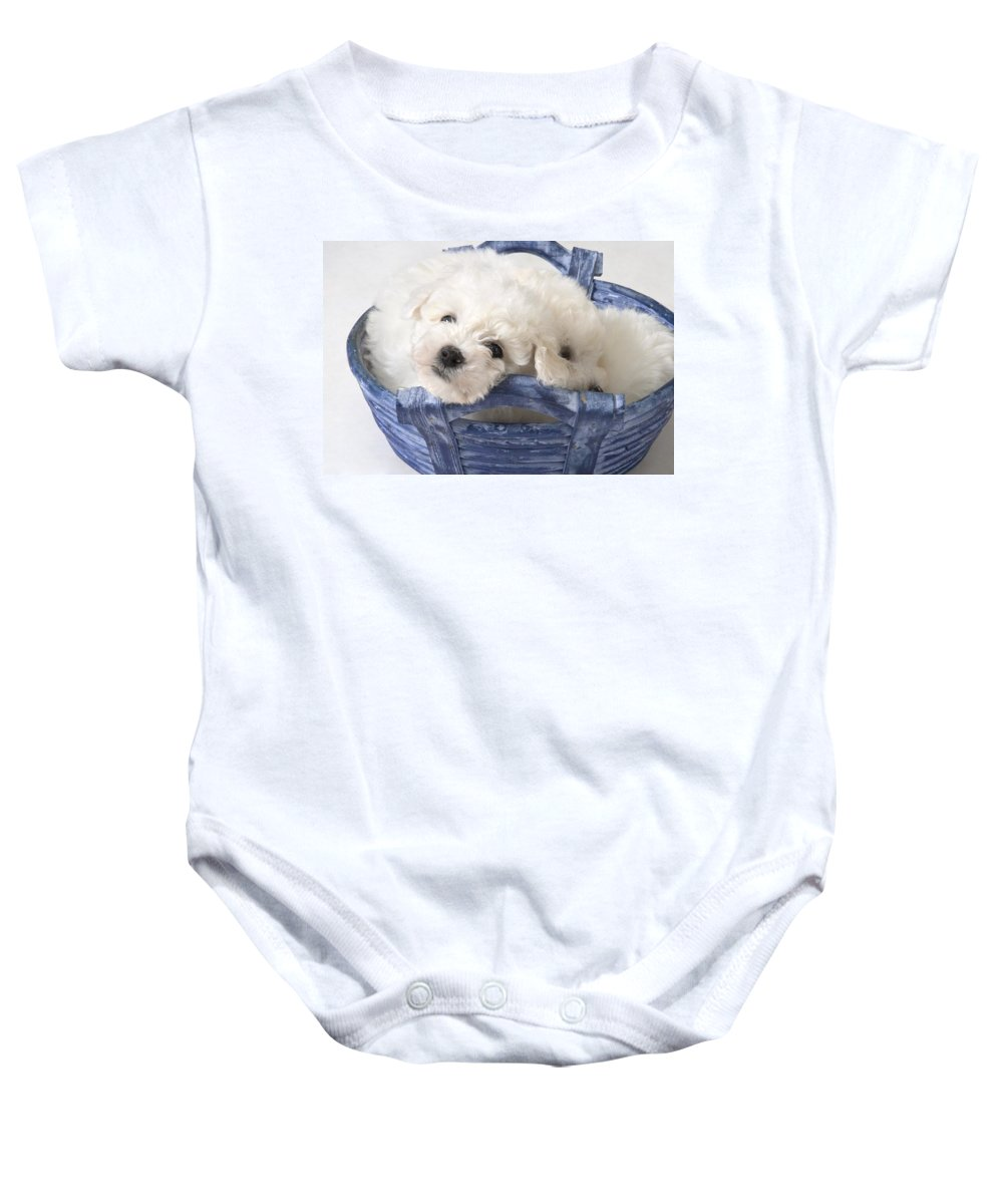 Animal Baby Onesie featuring the photograph Cute White Pups by Corey Hochachka