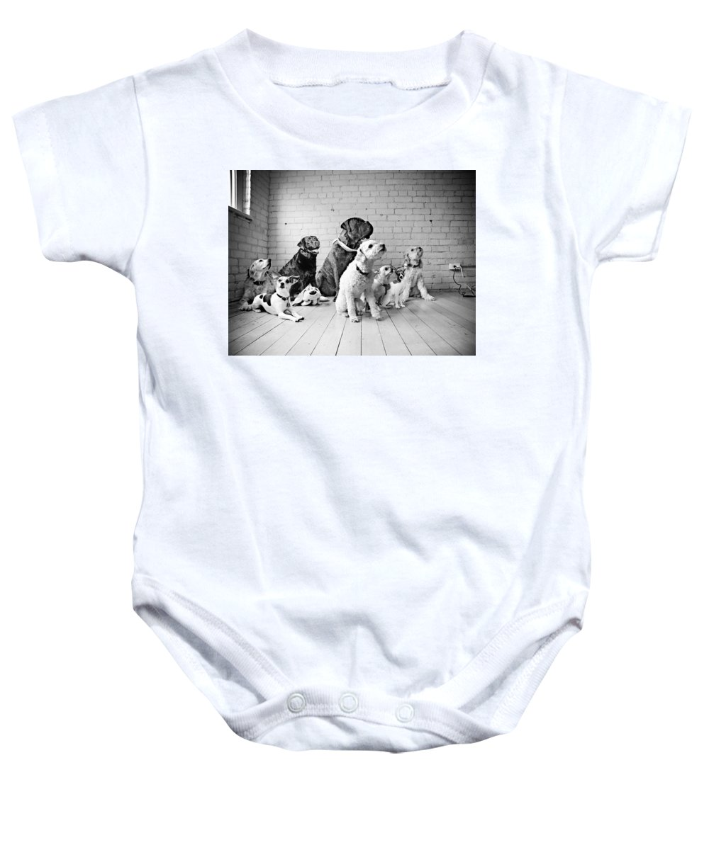Dog Baby Onesie featuring the photograph Dogs Watching At A Spot by Sumit Mehndiratta