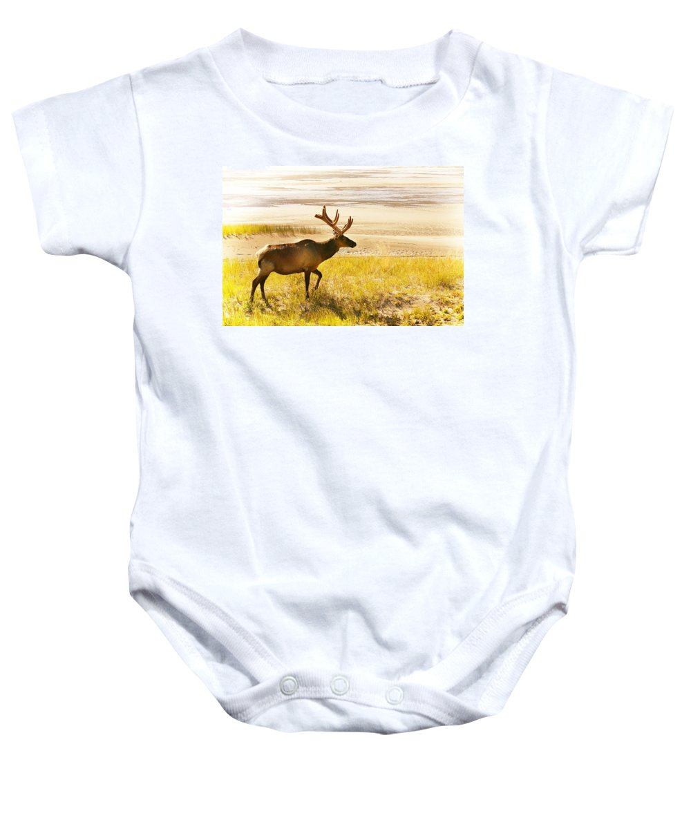 Field Baby Onesie featuring the photograph Elk Wanders On Yellow Landscape by Con Tanasiuk