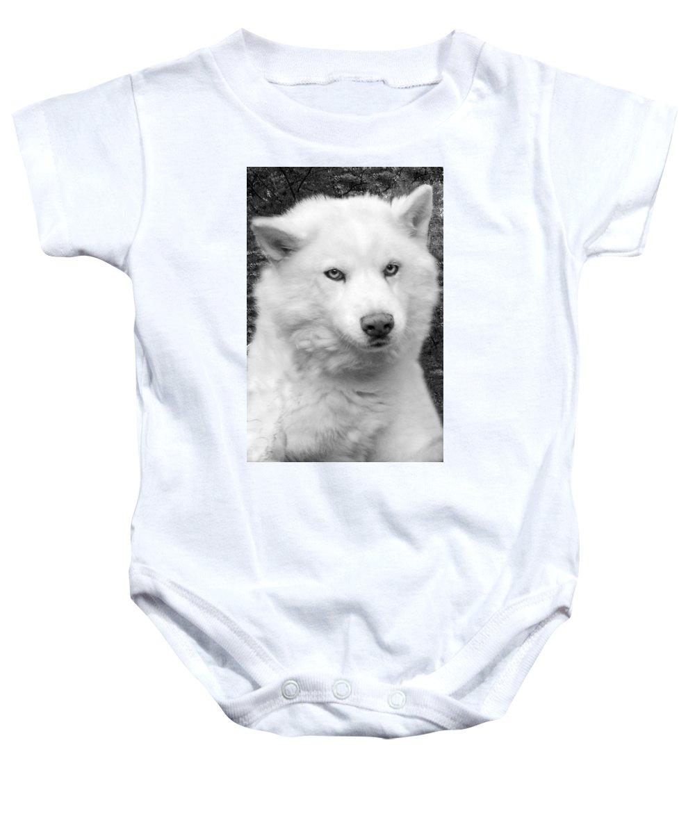 Siberian Husky Baby Onesie featuring the photograph Lakota by Eric Albright