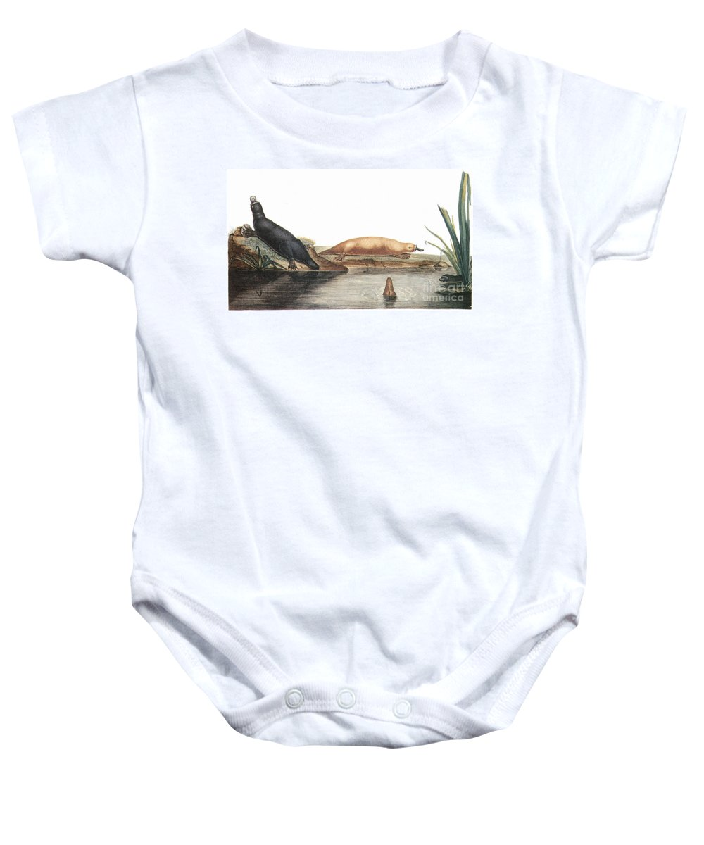 1804 Baby Onesie featuring the photograph Platypus, 1804 by Granger