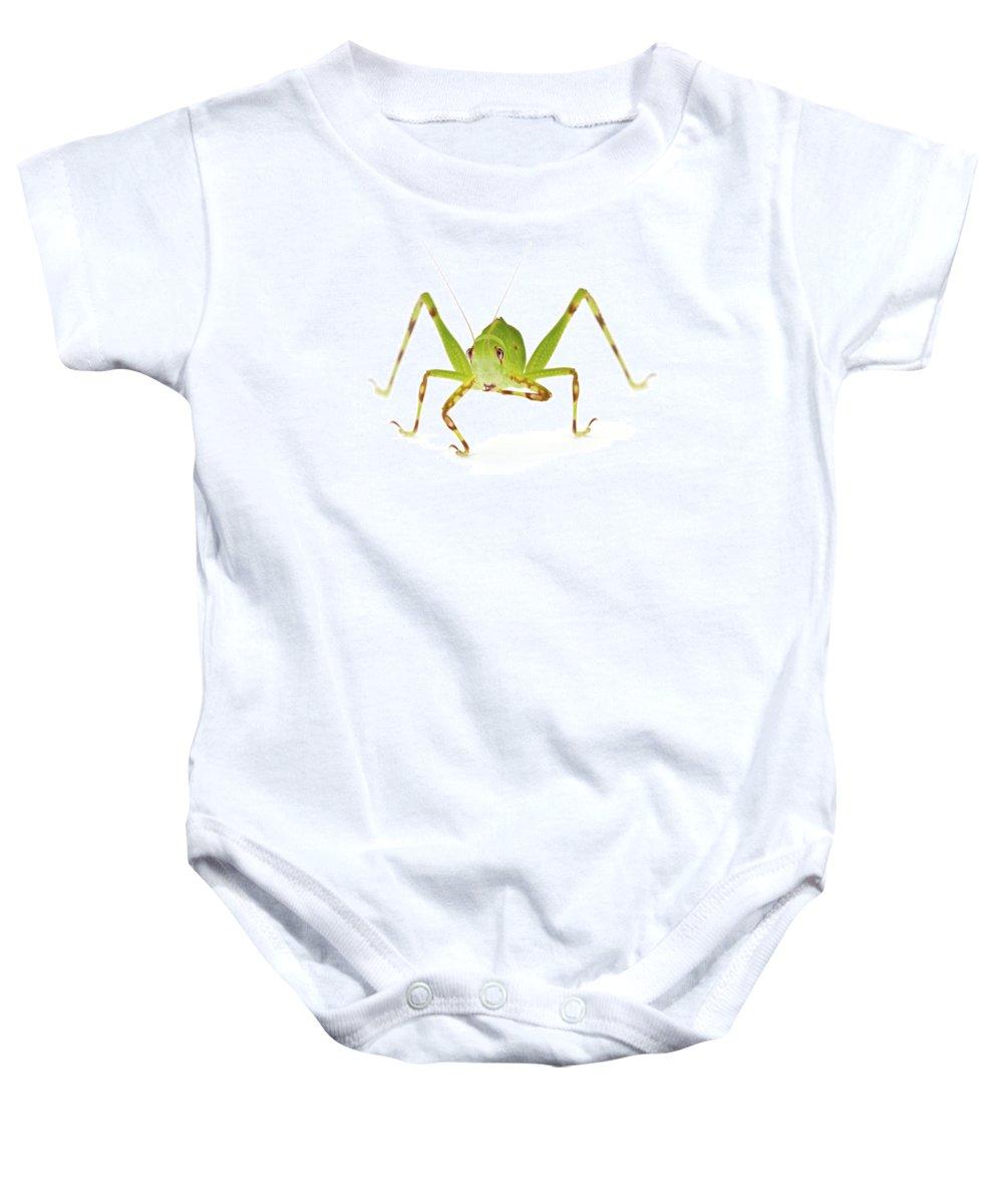00478857 Baby Onesie featuring the photograph Pollen Katydid Cleaning Foot La Selva by Piotr Naskrecki