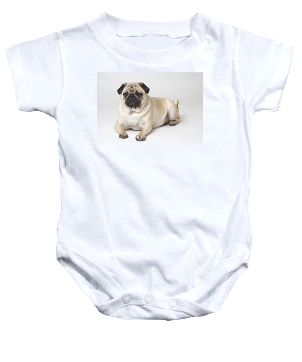 Animal Baby Onesie featuring the photograph Portrait Of A Pug Dog by Corey Hochachka