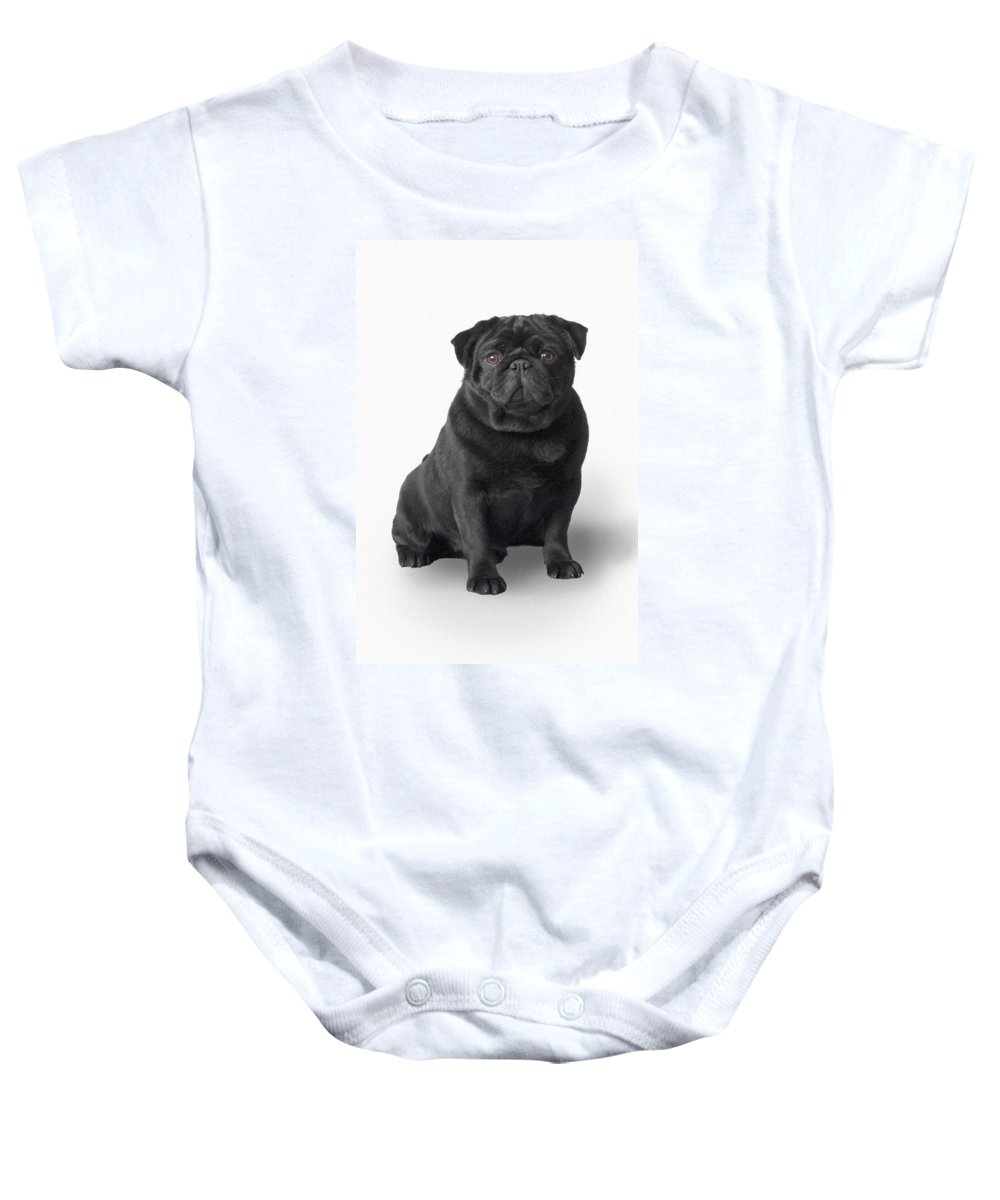 Sweet Baby Onesie featuring the photograph Pug Dog by Corey Hochachka