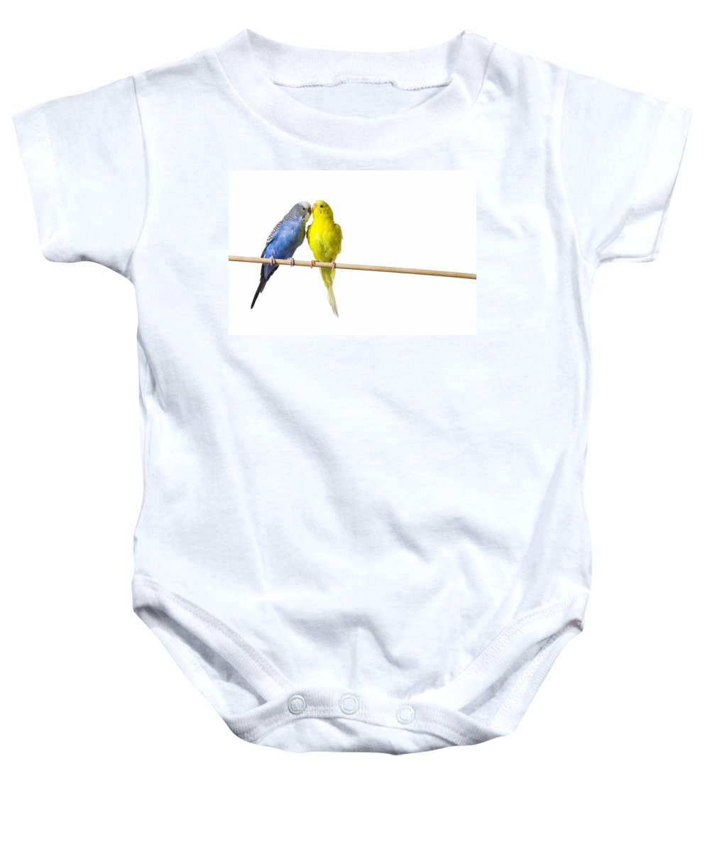 Animal Baby Onesie featuring the photograph Two Budgies On A Perch by Corey Hochachka