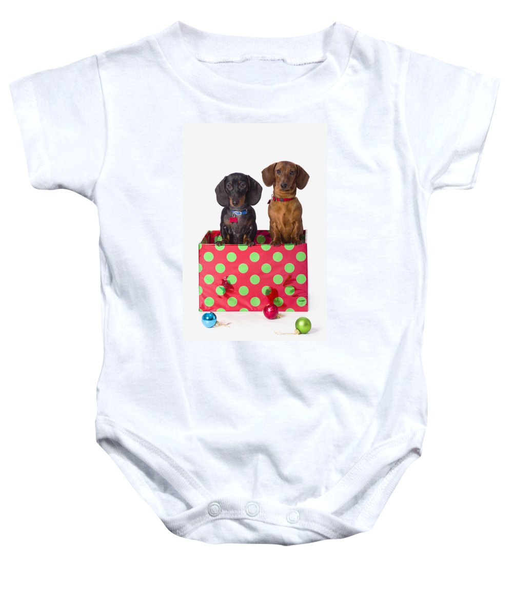 Ball Ornament Baby Onesie featuring the photograph Two Dachshund Puppies Inside A Polka by Corey Hochachka
