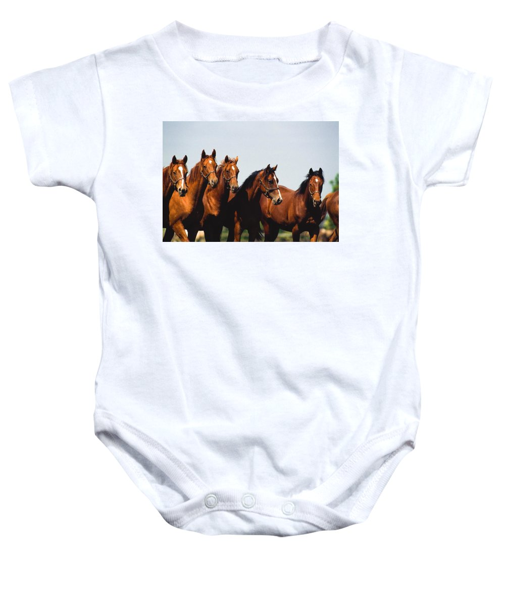 Blue Sky Baby Onesie featuring the photograph Yearling Thoroughbred by The Irish Image Collection
