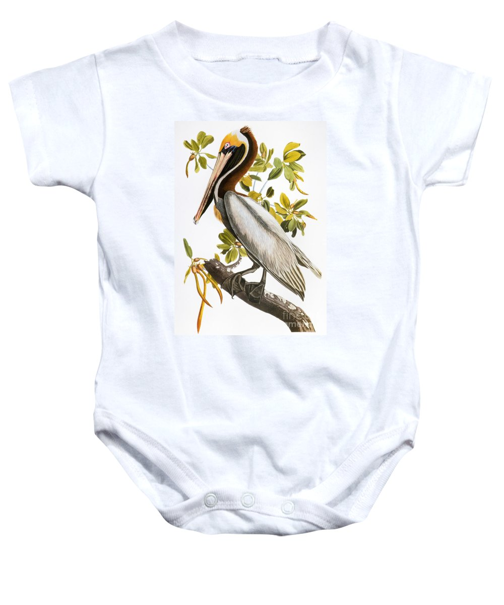 1838 Baby Onesie featuring the photograph Audubon: Pelican by Granger