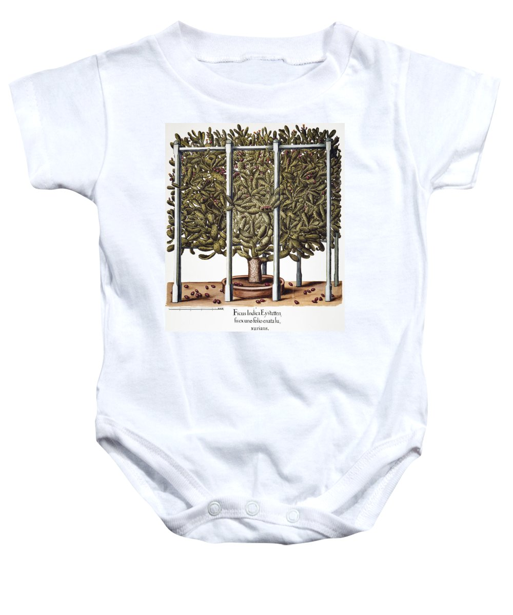 1613 Baby Onesie featuring the photograph Cactus: Opuntia, 1613 by Granger