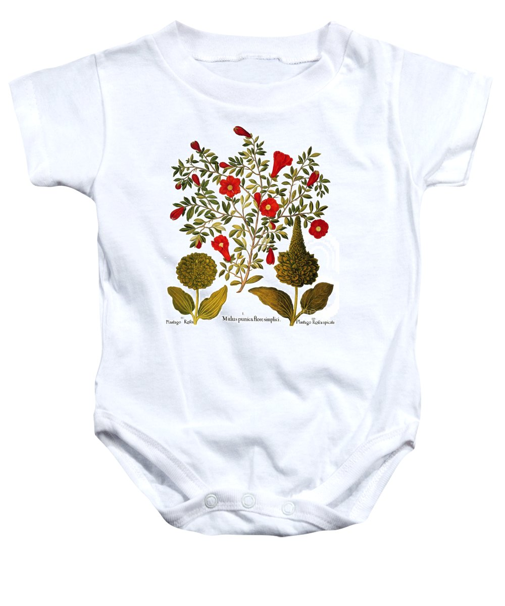 1613 Baby Onesie featuring the photograph Pomegranate, 1613 by Granger
