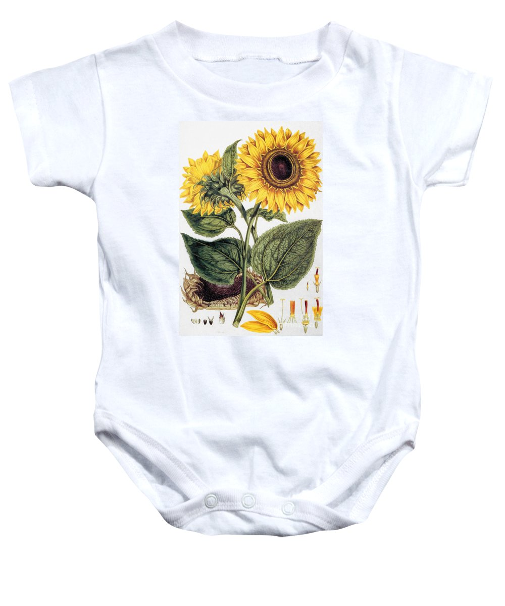 1777 Baby Onesie featuring the photograph Sunflower by Granger