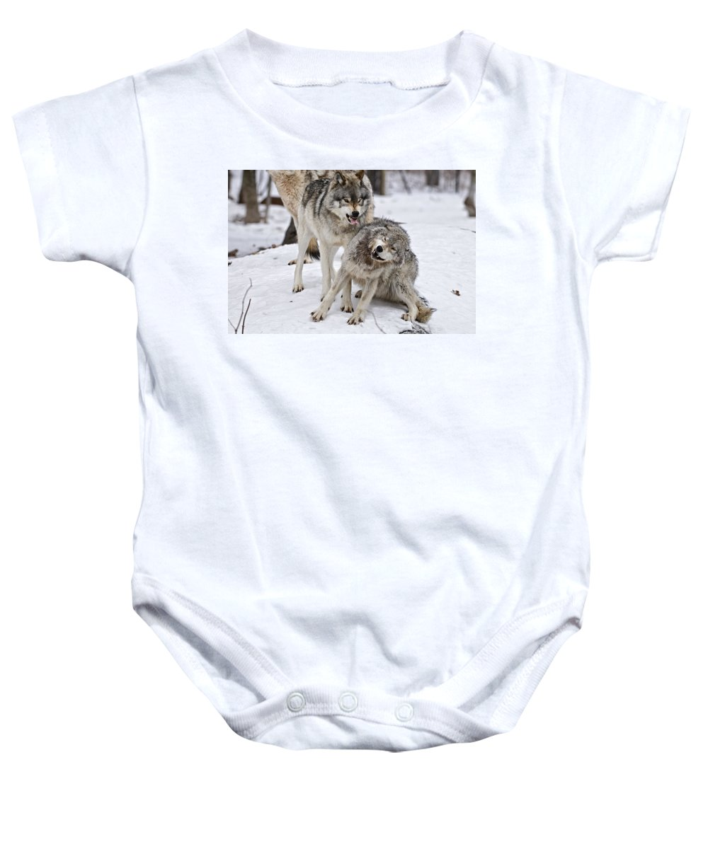 Michael Cummings Baby Onesie featuring the photograph Timber Wolves In Winter by Michael Cummings