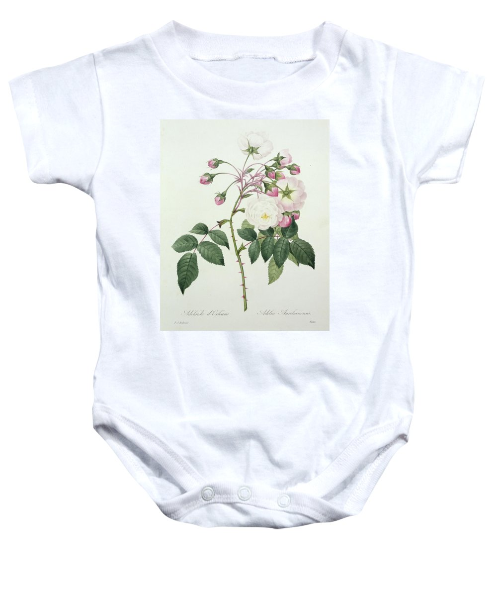 Adelia Baby Onesie featuring the drawing Adelia Aurelianensis by Pierre Joseph Redoute