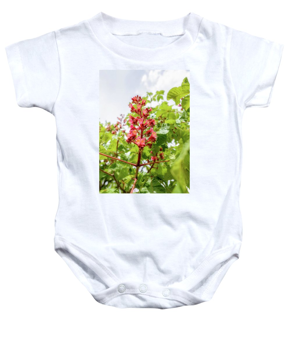 Aesculus Baby Onesie featuring the photograph Aesculus X Carnea, Or Red Horse-chestnut Flower by Alain De Maximy
