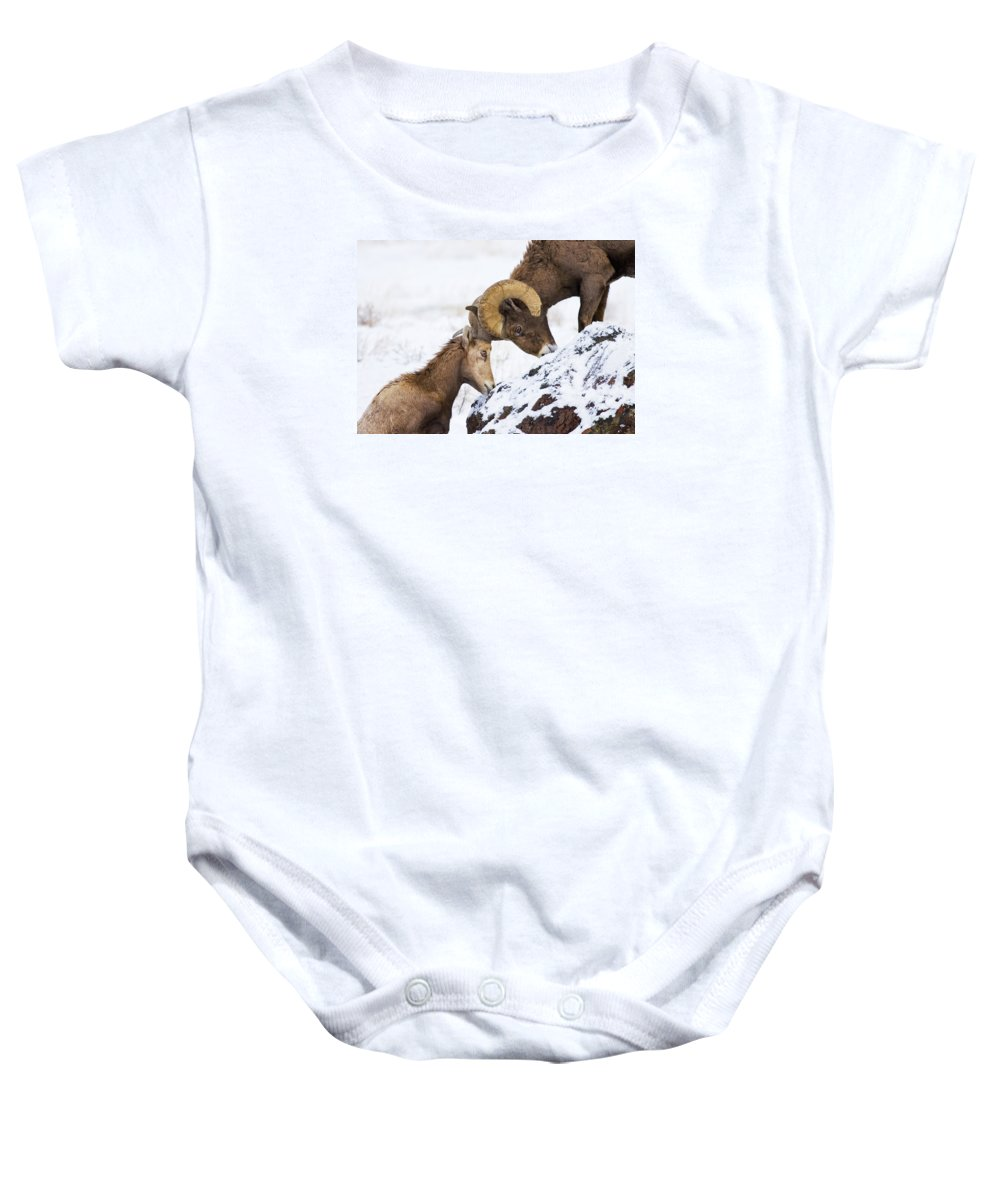 Bighorn Baby Onesie featuring the photograph An Uphill Battle by Mike Dawson