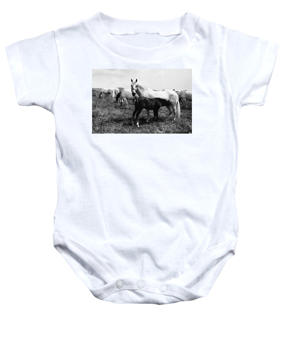 1965 Baby Onesie featuring the photograph Austria: Horse Farm by Granger