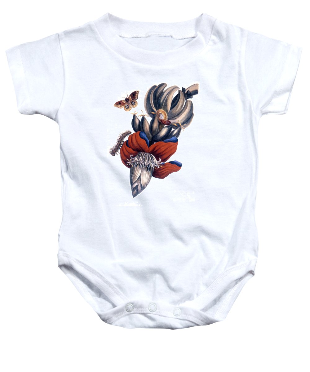 1726 Baby Onesie featuring the photograph Bananas (musa Paradisiaca): by Granger