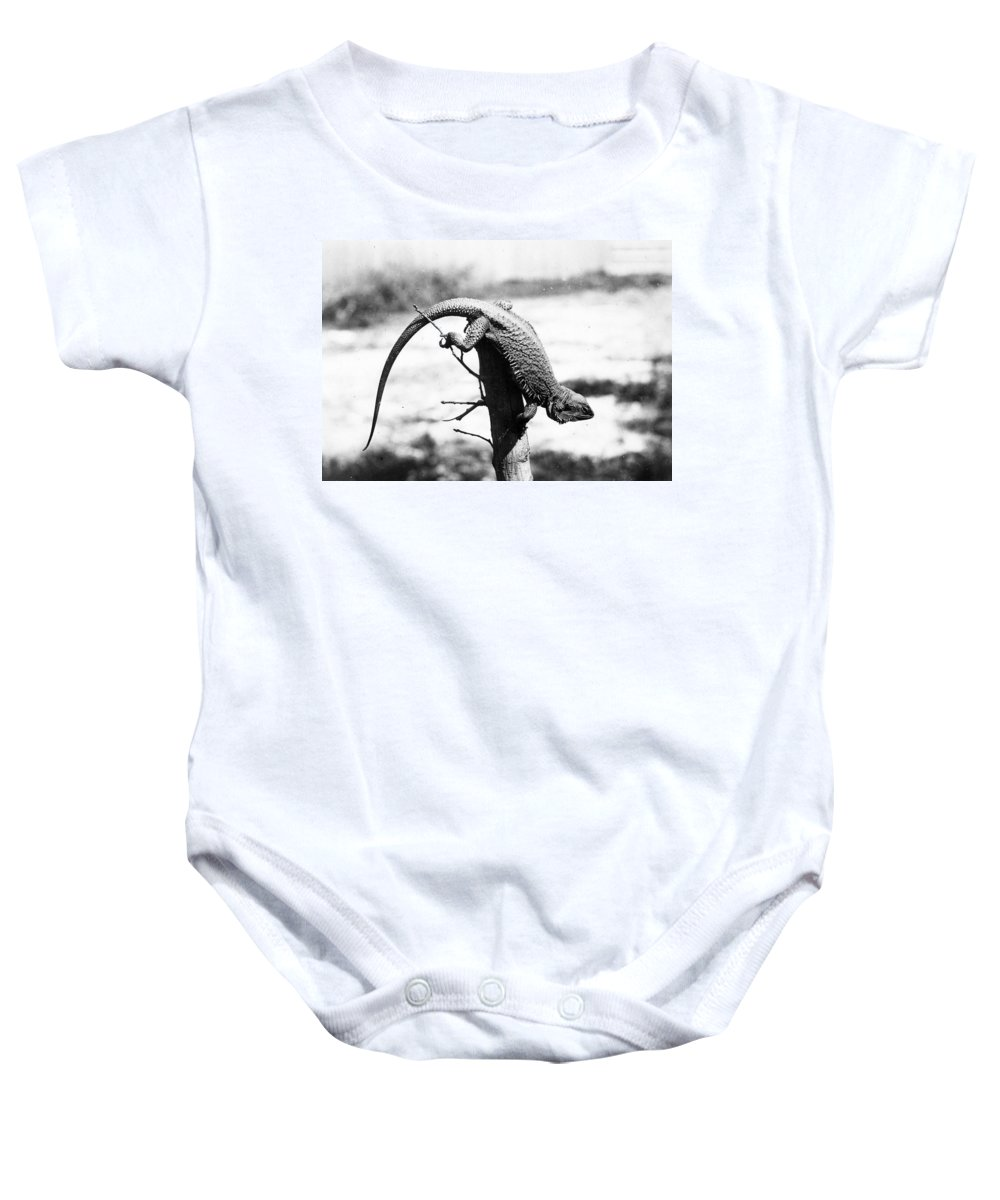 1920 Baby Onesie featuring the photograph Bearded Lizard by Granger