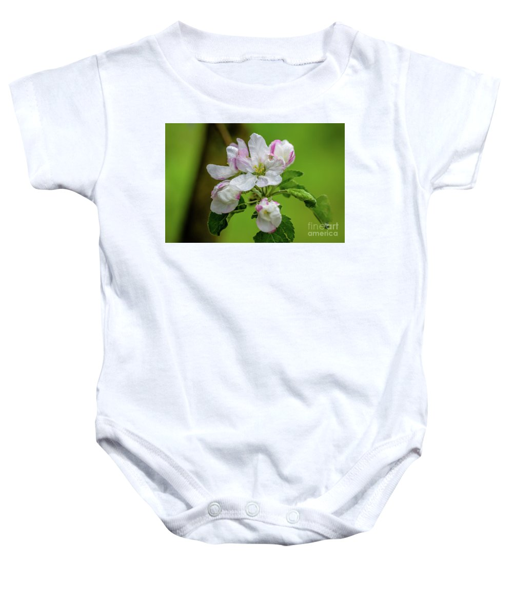 Apple Blossoms Baby Onesie featuring the photograph Blossoms In The Rain by Sam Judy