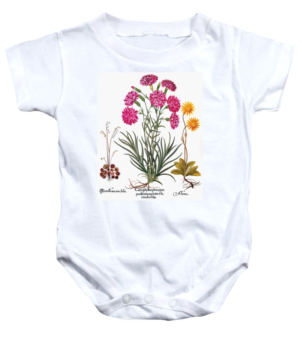 1613 Baby Onesie featuring the photograph Botany: Flowers, 1613 by Granger