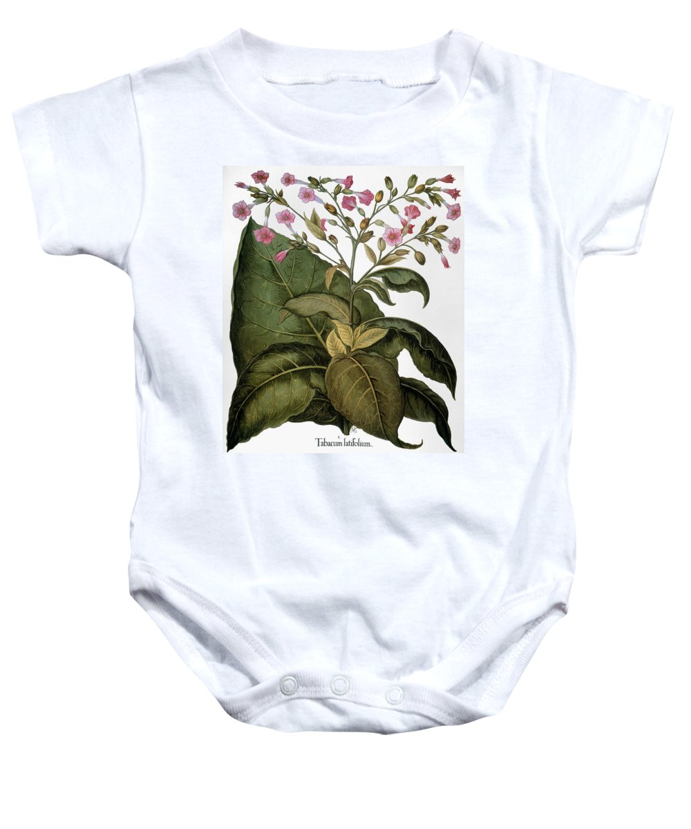 1613 Baby Onesie featuring the photograph Botany: Tobacco Plant by Granger