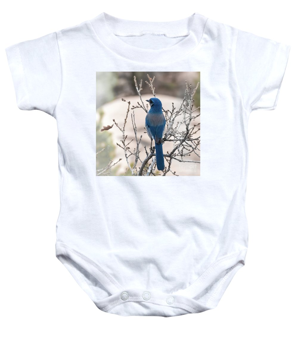 Blue Jay Baby Onesie featuring the photograph Contemplating The Winter To Come by Jennifer Mitchell