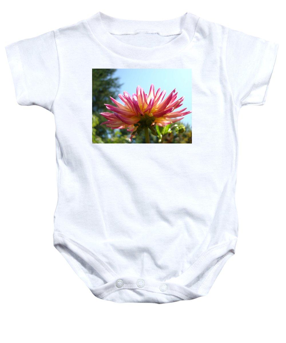 Dahlia Baby Onesie featuring the photograph Dahlia Floral Garden Art Prints Canvas Summer Blue Sky Baslee Troutman by Baslee Troutman
