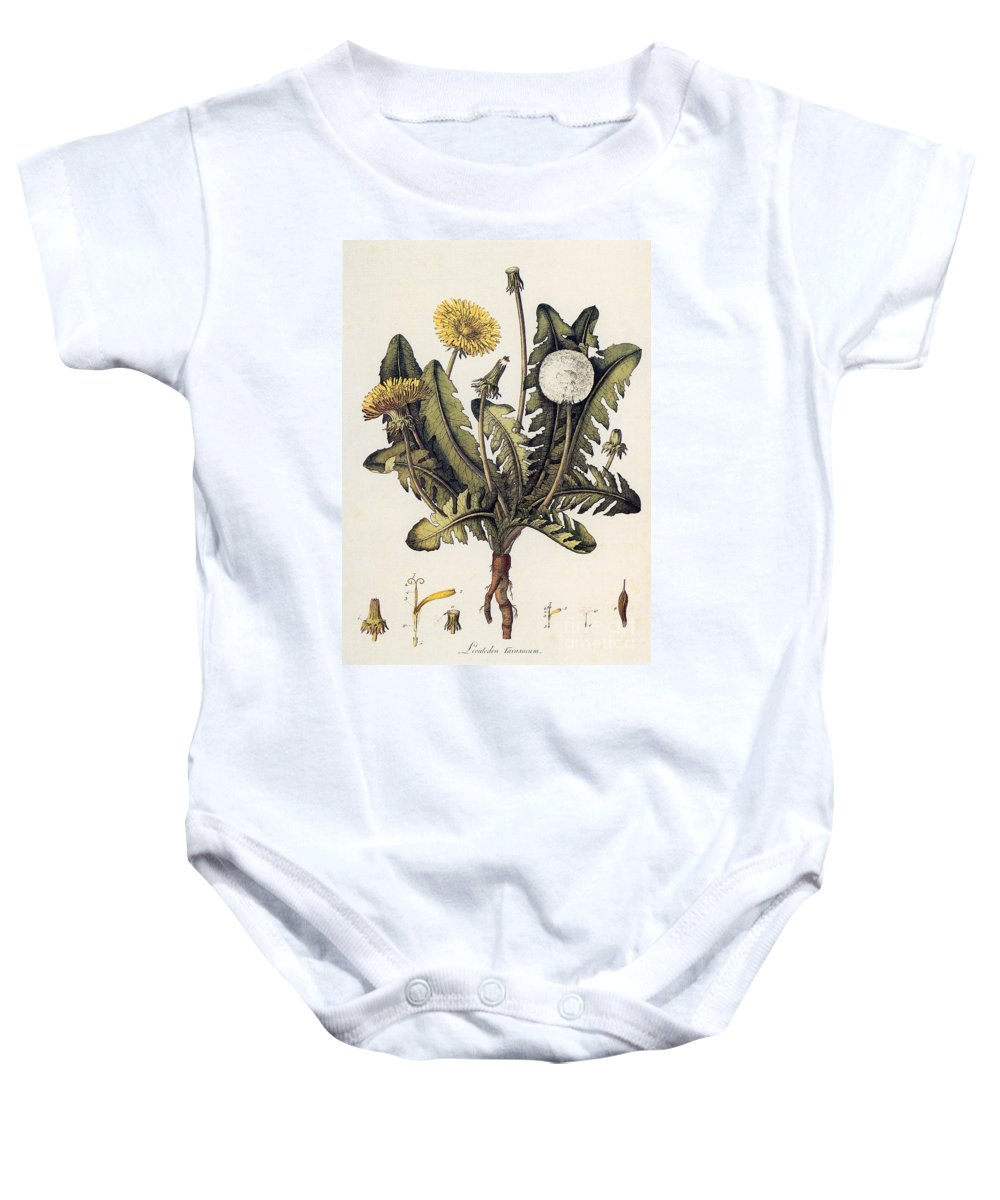 18th Century Baby Onesie featuring the photograph Dandelion by Granger