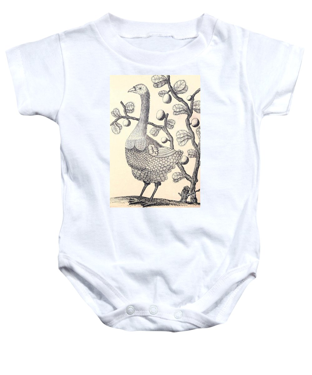 Dodo Baby Onesie featuring the photograph Dodo Bird Rodriguez Solitaire, Extinct by Biodiversity Heritage Library