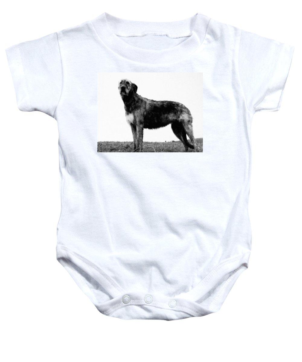 20th Century Baby Onesie featuring the photograph Dog: Irish Wolfhound by Granger