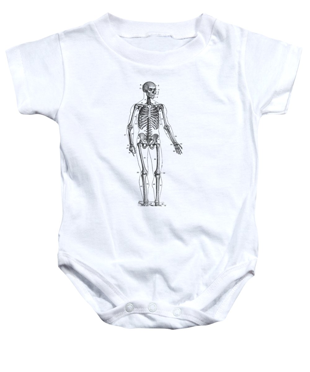 Forward Facing Skeletal Diagram - Vintage Anatomy Poster Onesie for ...