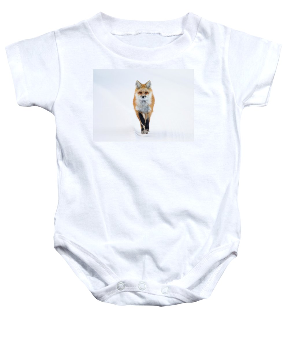 Red Fox Baby Onesie featuring the photograph Fox Trot by Max Waugh