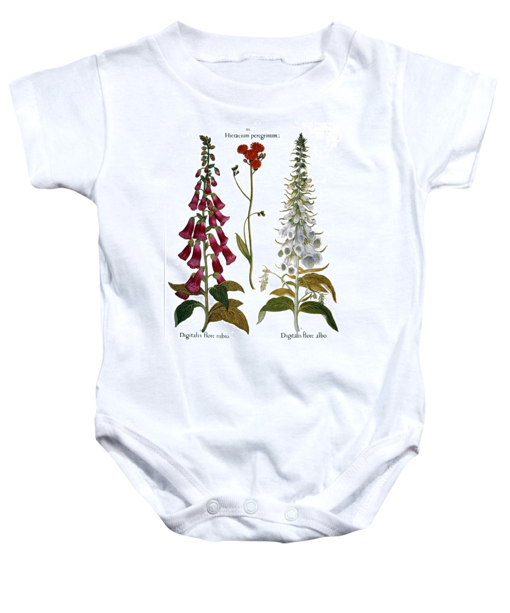 1613 Baby Onesie featuring the photograph Foxglove And Hawkweed by Granger