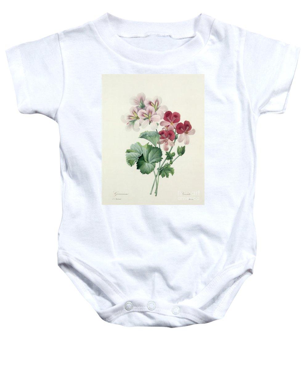 Geranium Baby Onesie featuring the drawing Geranium Variety by Pierre Joseph Redoute