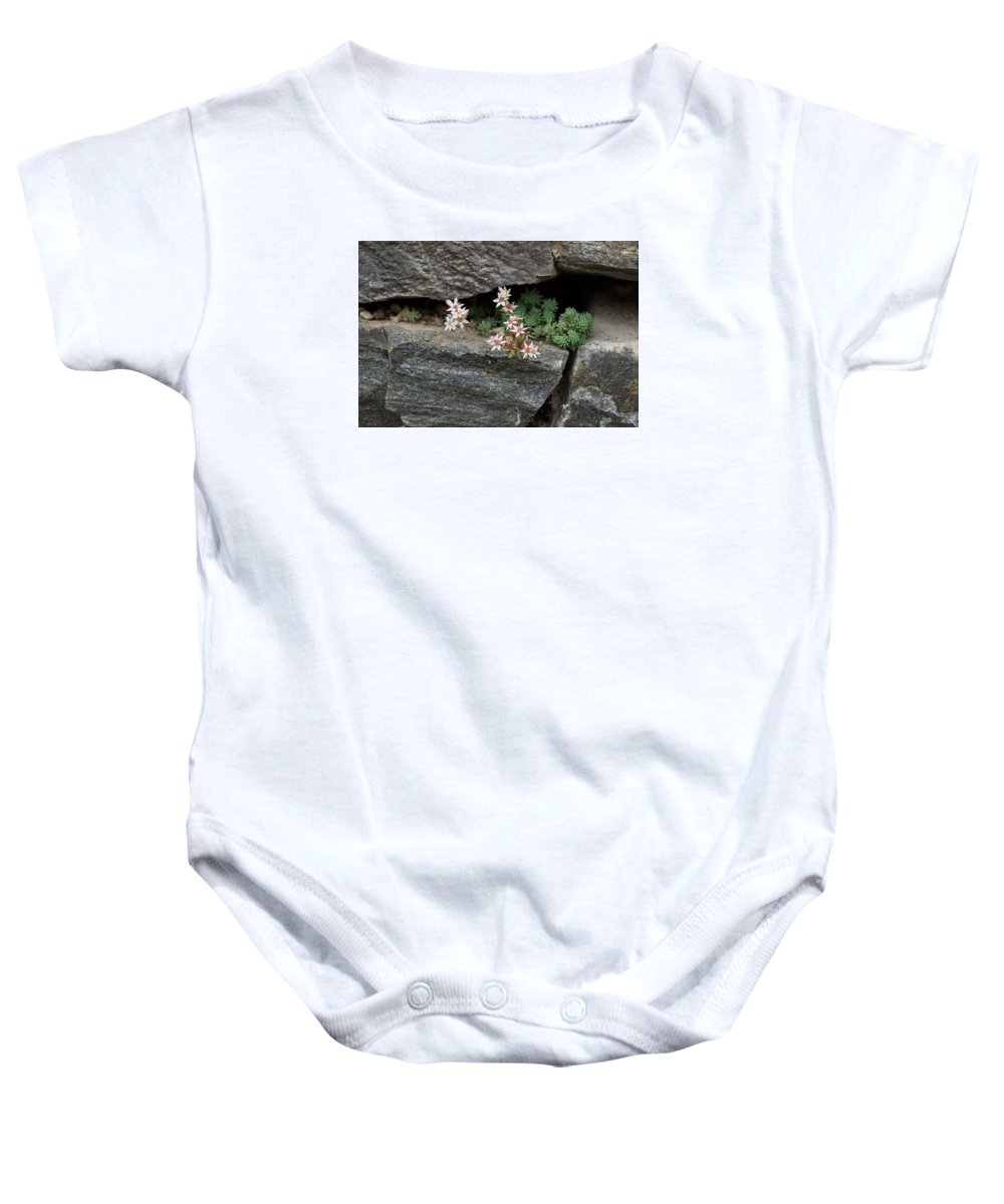 Georgia Mizuleva Baby Onesie featuring the photograph Life On Bare Rock - Pale Pink Succulents On The Wall by Georgia Mizuleva